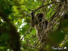 Full Day:Chocolate, Dolphins & Howler Monkeys from Guayaquil