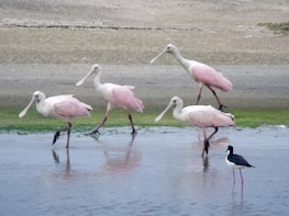 Full Day: Salinas Tour and Bird Route from Guayaquil
