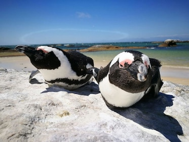 Cape Peninsula & Penguin Beach Half Day
