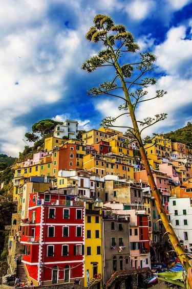 Show item 2 of 6. Cinque Terre full day