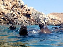 Tour to Palomino Islands