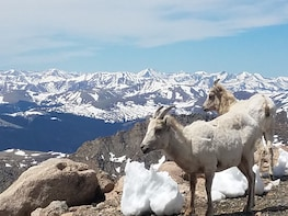#9 Summer Mountain Summit Mt. Evans