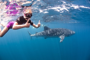 Swim with Whalesharks with Lunch