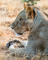 Samburu Explorer - Three Day Private Safari