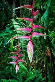 Flowers Pink 2.jpeg