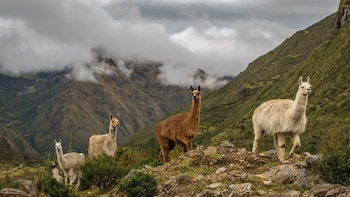 4 Days Inca Trail connection lares to Machu Picchu