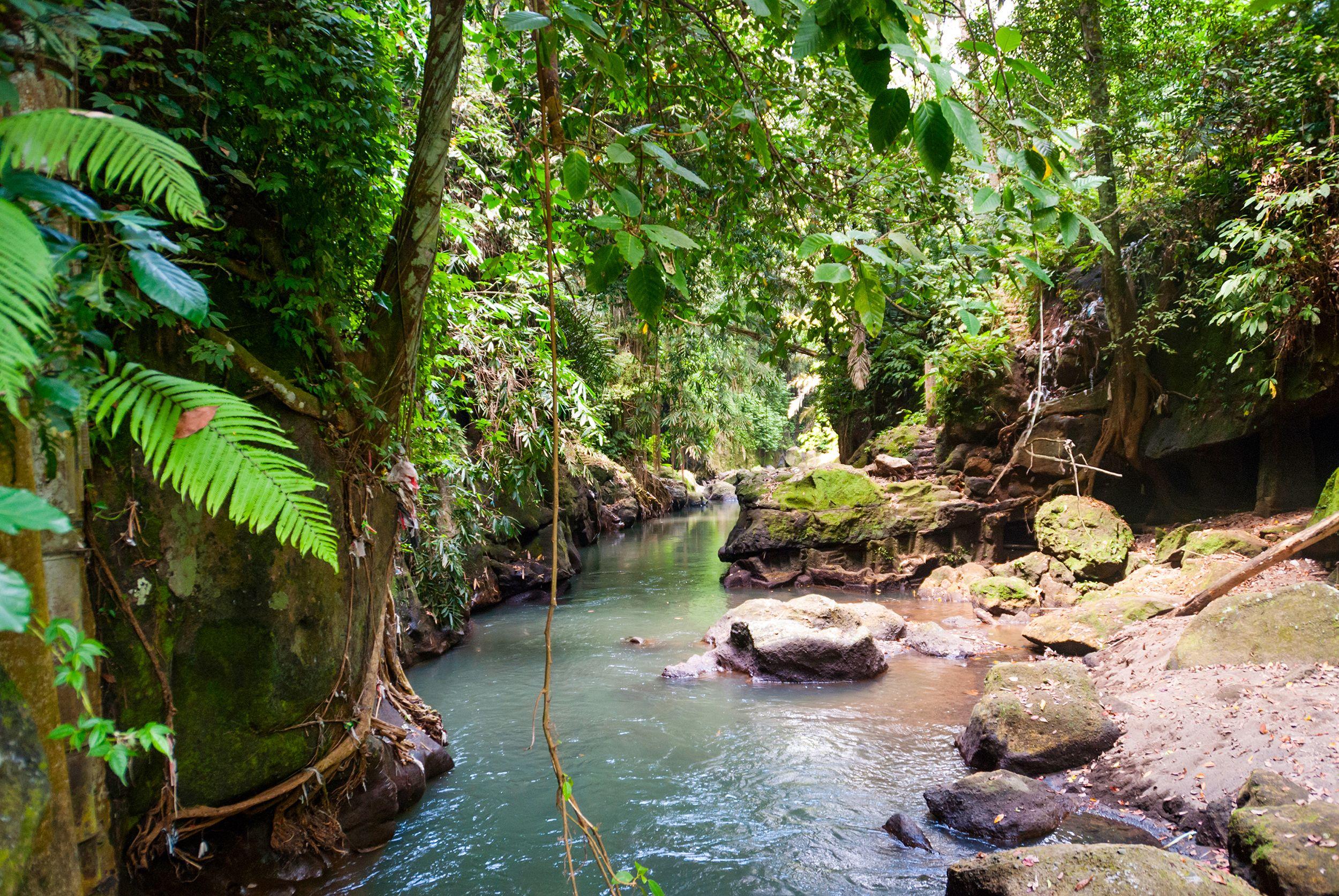 Waterfall Hike & Chocolate Tour At The Kings Gardens Maui