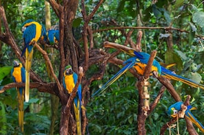Foz do Iguazu Bird Park - Tickets Included