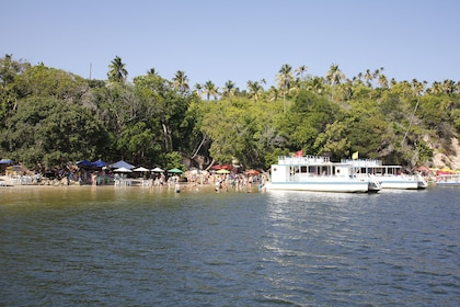 Carneiros Beach Day Tour