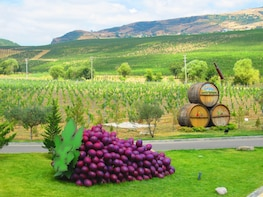 Private Organic Wine Tour to Shamakhi with Local Lunch