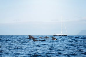 Whale and Dolphin watching in small yacht from the South