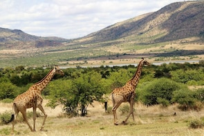 Ultimate Pilanesberg Open Vehicle Day Tour