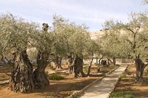 Shore Excursion - Best of Jerusalem and Bethlehem from Haifa
