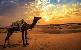 Private Camel Safari near Bikaner with Guide & Dinner
