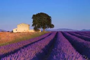 Full day : Provence & Lavender