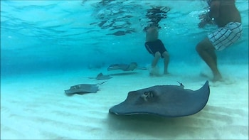 3 Stop Stingray City, Starfish Point and Coral Garden Tour
