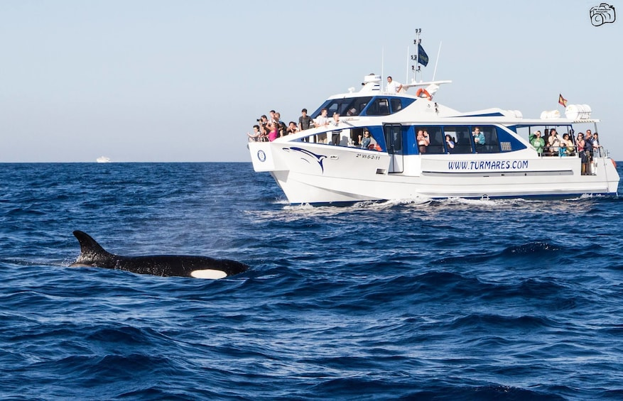 Show item 7 of 7. Whales and Dolphins tour