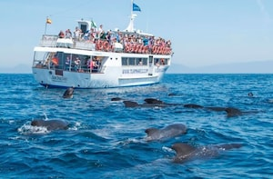 Whales and Dolphins tour