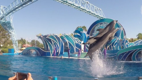 Two dolphins jump out of water at Pattaya Dolphin World