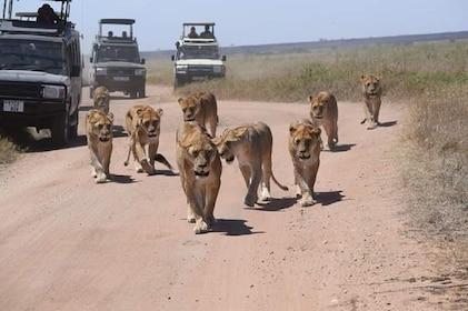 Tarangire wildlife park day trip