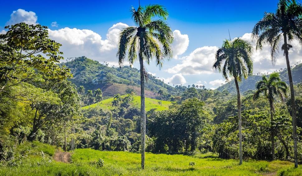Jungle Buggies & Monkeyland Adventure from Punta Cana