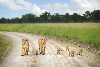 nairobi-national-park-excursion.jpg