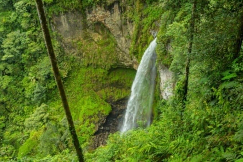 Show item 1 of 1. Children's Eternal Rainforest Trekking Expedition – BEN Aren