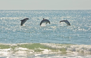 Guided Kayak Dolphin Watching Eco-Tour