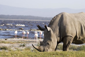 4-Day Small Group Maasai Mara and Lake Nakuru from Nairobi