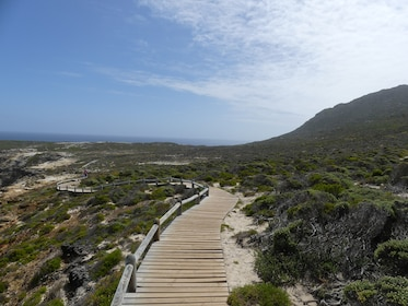 Best of the Cape Full Day
