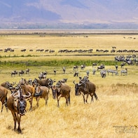3 days camping safari to serengeti & the ngorongoro crater