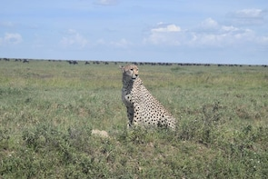 5 days serengeti, ngorongoro crater & tarangire safari