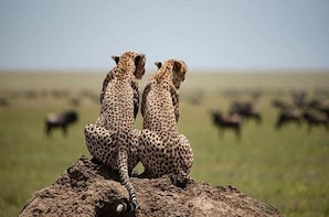 serengeti, ngorongoro & tarangire 4 days camping tour