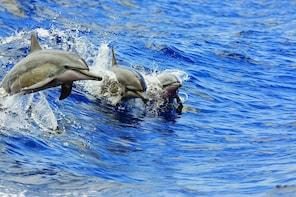 Waikoloa Wildlife-Watching Cruise