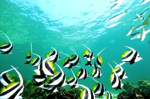 Coral Island Escapade (ex-Langkawi) - Small Group Tour