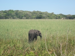 Maputo Special Reserve Day Trip - Open Vehicle