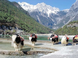 Yak Meadow at Jade Dragon Snow Mountain and Shuhe Town