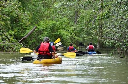 Damas Island Kayaking from Jaco