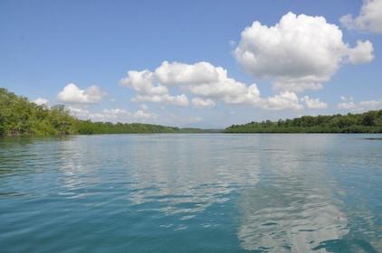 Damas Island Mangrove Boat Trip from Jaco