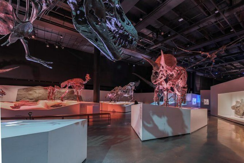 Show item 1 of 12. Houston Museum of Natural Science General Admission