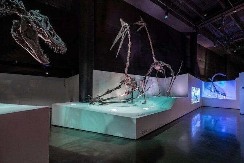 Show item 4 of 12. Morian Hall of Paleontology