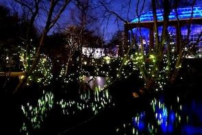 Klias Wetland Cruise & Fireflies - Private