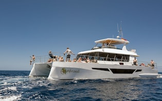 Morning Cruise Afrikat Gran Canaria