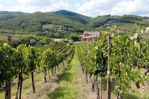 Private Van: Chianti Wine experience day trip from Florence