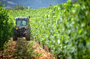 Private Tours: Brunello wine tours from Florence