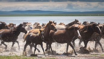 The Best 5 Days Tour in Central Mongolia