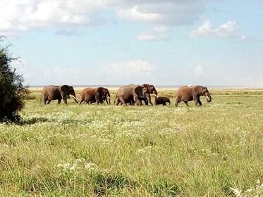 2 Days 1 Night Amboseli National park safari package
