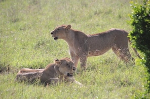 2 Days 1 Night Maasai Mara National PARK JOINING TOUR
