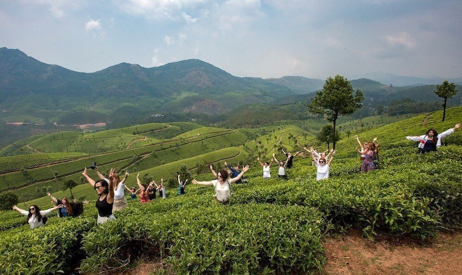 Show item 3 of 4. Munnar Tea Estate Tour with Guide and Cab