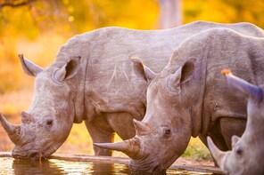 7 Days - Kruger Zululand Safari
